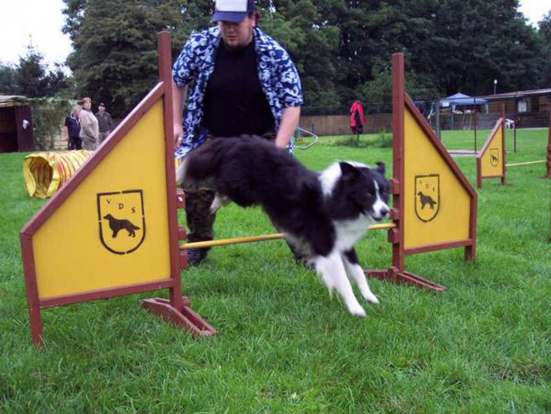 Agility Training: Kevin mit Leo (Border Collie)